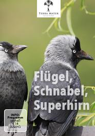 Flügel, Schnabel, Superhirn