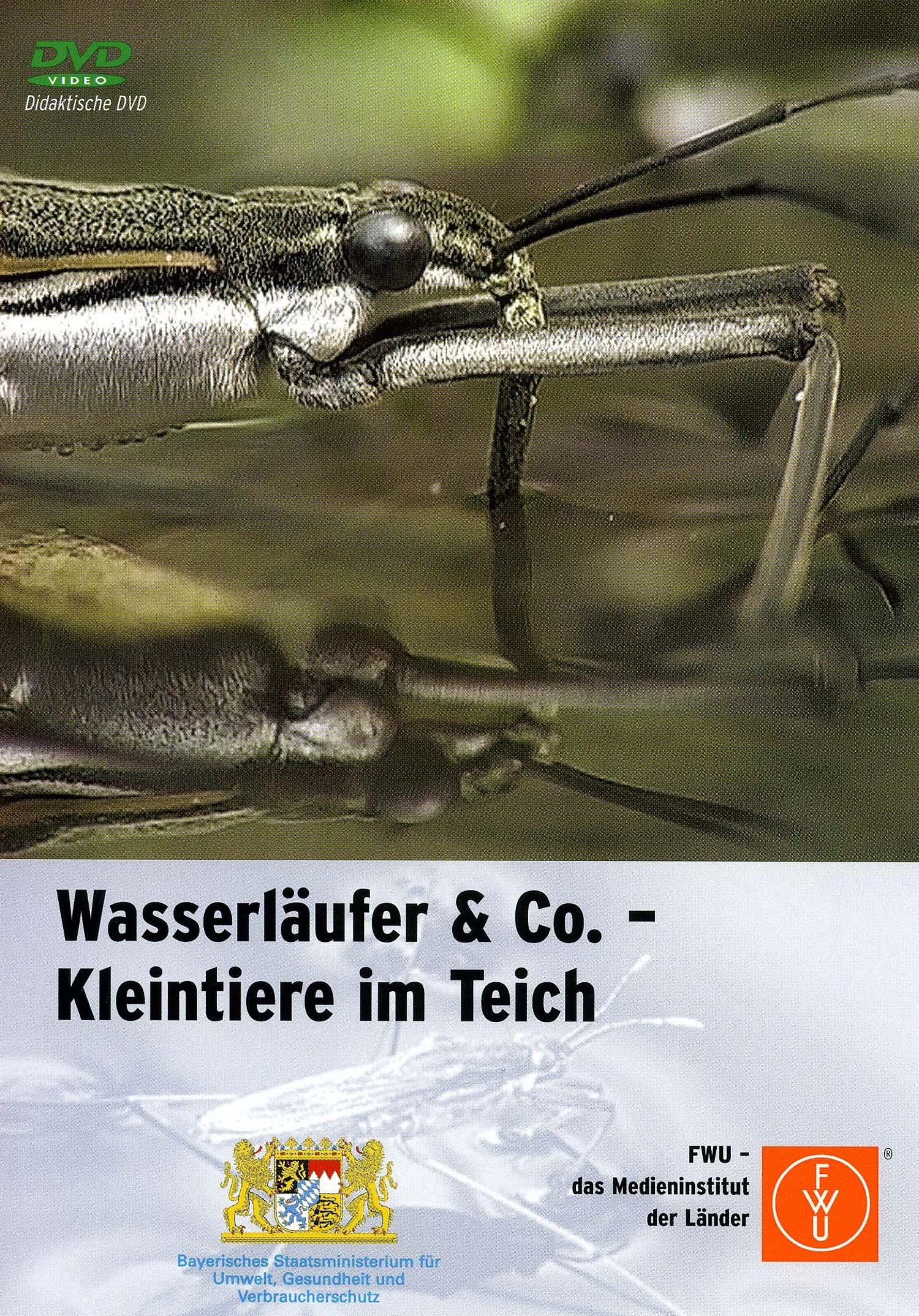 Wasserläufer & Co. - Kleintiere im Teich