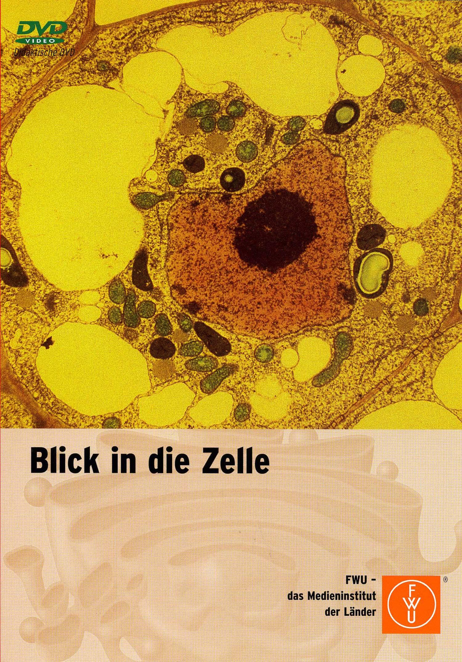 Blick in die Zelle