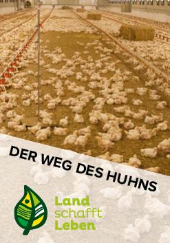 Der Weg des Huhns in Österreich
