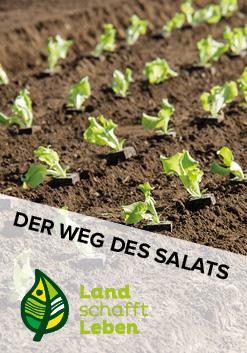 Der Weg des Salats in Österreich