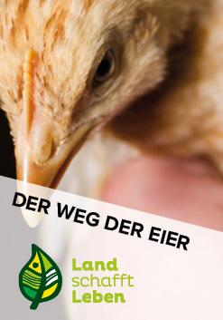 Der Weg der Eier in Österreich