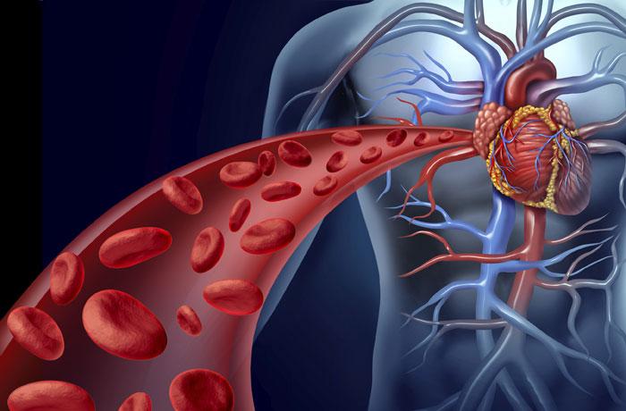 Blut – Herz – Blutkreislauf