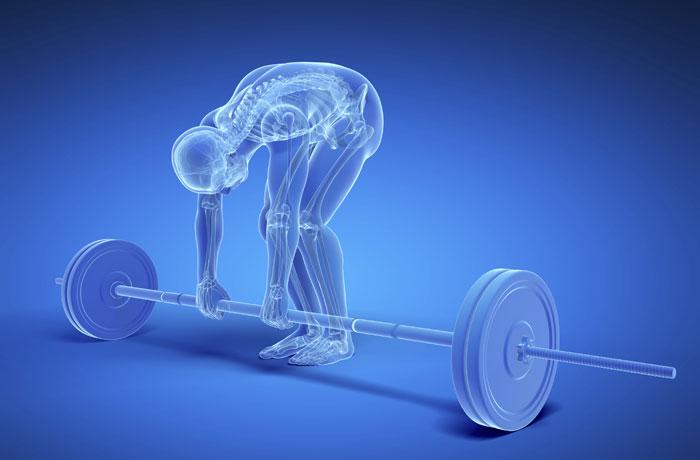 Knochen – Muskeln – Bewegung