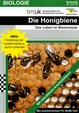 Die Honigbiene - Das Leben im Bienenstaat