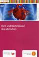 Herz und Blutkreislauf des Menschen