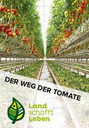Der Weg der Tomate in Österreich
